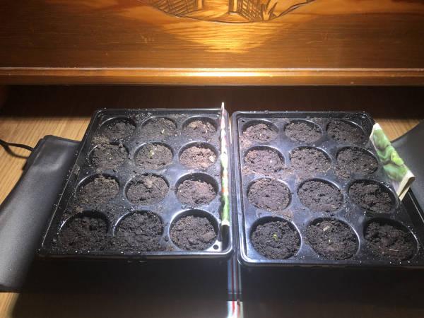 Smarta hem – Odla växter med hjälp av teknik Teknik i Hemmet